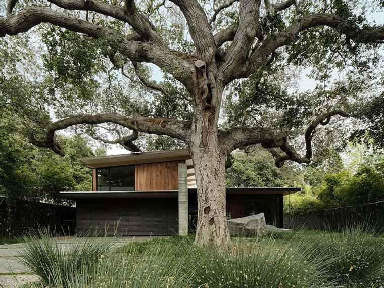 Oak Sanctuary