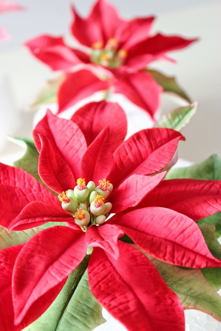 Christmas-flower-care-ideas-tips