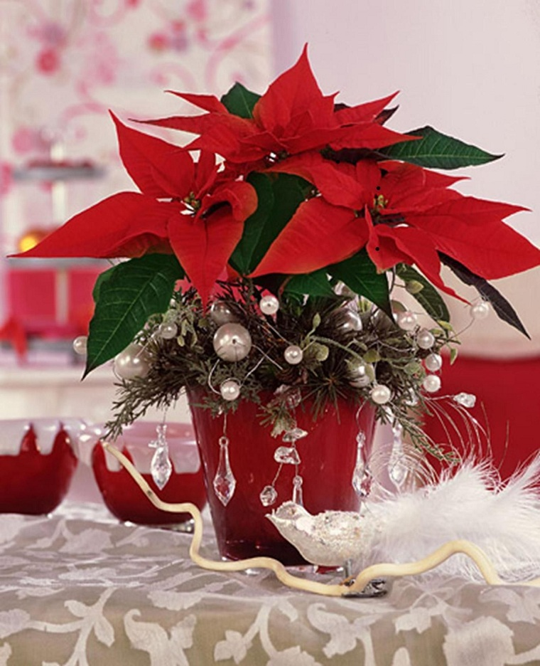 Christmas-flower-care-christmas-2020
