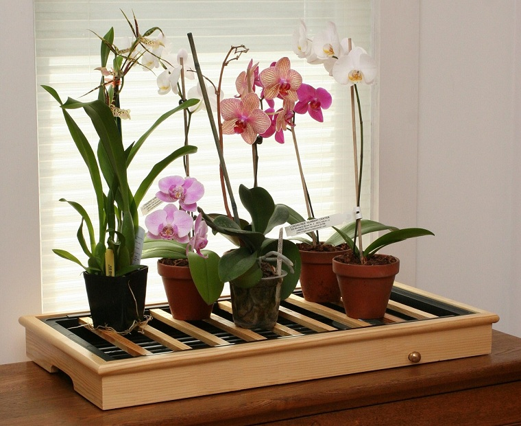 Growing orchids-home-decorating