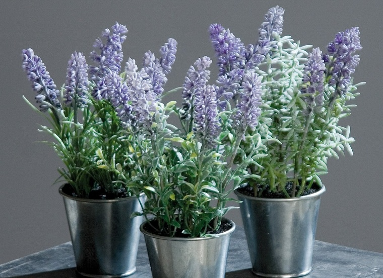 Lavender cultivation-home-advising