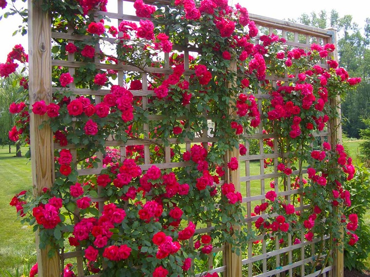 outdoor-hung-plants-red-roses