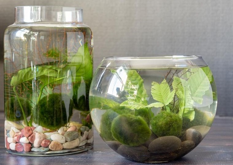 Clear Container Water Garden